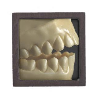 A dental model gift box