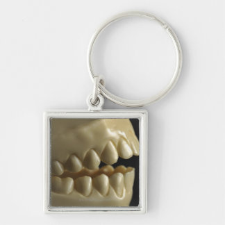 A dental model keychain
