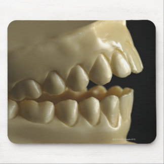 A dental model mouse pad