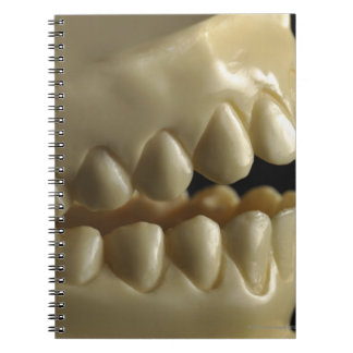 A dental model notebook