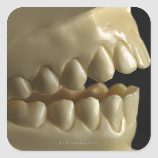 A dental model square sticker