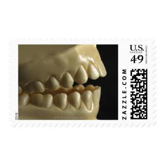 A dental model stamp