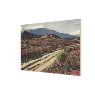 A Desert Road through Springtime Flower Fields Canvas Prints
