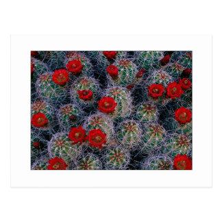 """""""A Desert Rose Garden"""" Postcard"""