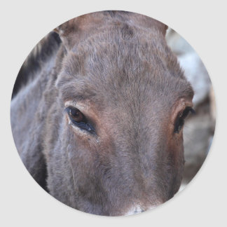 A detail photo of a donkey head. classic round sticker