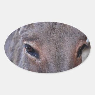 A detail photo of a donkey head. oval sticker