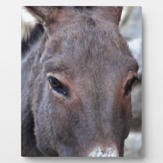 A detail photo of a donkey head. plaque