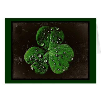A Dew Covered Shamrock Card