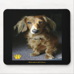 A Distinguished Dachshund Mousepad