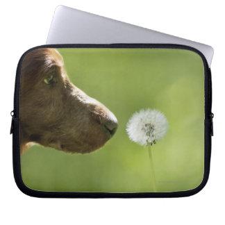 A dog and a dandelion. computer sleeve