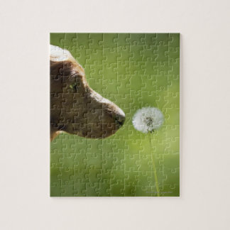 A dog and a dandelion. jigsaw puzzle