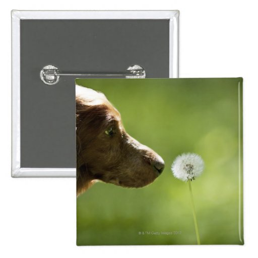 A dog and a dandelion. pins