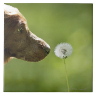 A dog and a dandelion tile