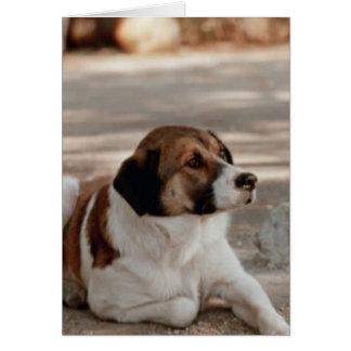 A Dog Card