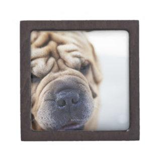 A dog, close-up. keepsake box