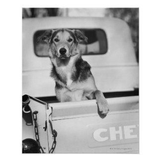 A dog in a car. poster