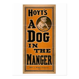 A dog in the Manger, 'Hoyt's' Retro Theater Postcard