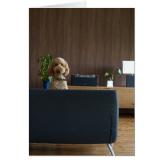 A dog in the riving room greeting card