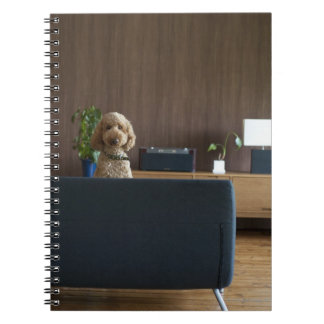 A dog in the riving room notebook