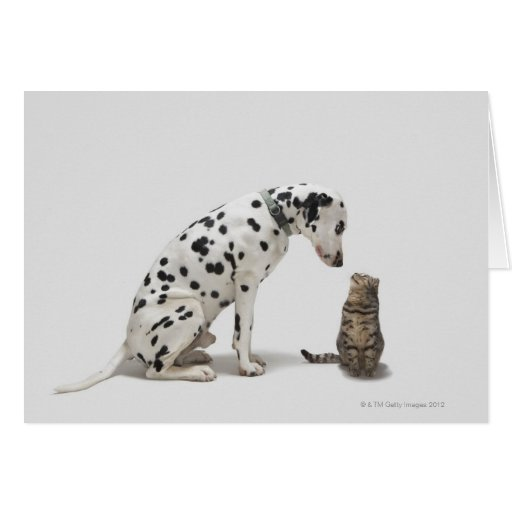 A dog looking at a cat greeting cards