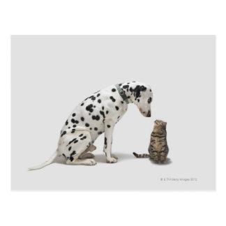 A dog looking at a cat postcard