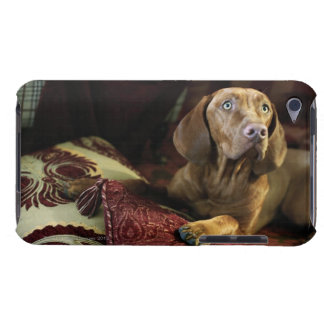 A dog lying on pillows. barely there iPod cover