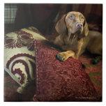 A dog lying on pillows. ceramic tiles