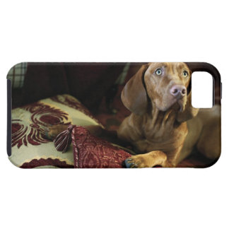 A dog lying on pillows. iPhone SE/5/5s case