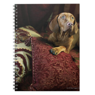 A dog lying on pillows. notebook