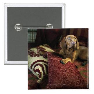 A dog lying on pillows. pinback button
