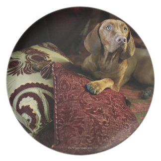 A dog lying on pillows. dinner plate