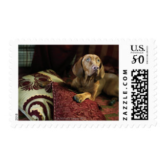 A dog lying on pillows. postage