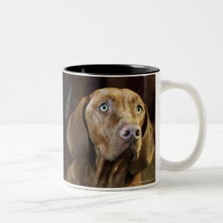 A dog lying on pillows. Two-Tone coffee mug