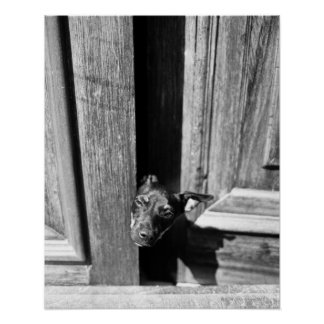 A dog peeking out from a door, close-up. poster