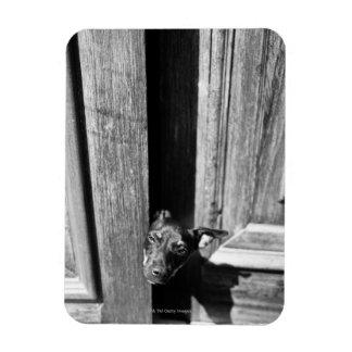 A dog peeking out from a door, close-up. rectangular magnets