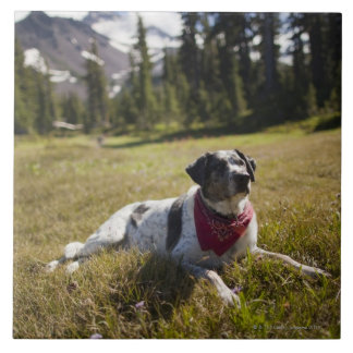 A dog rests after hiking to Jefferson Park in Ceramic Tile