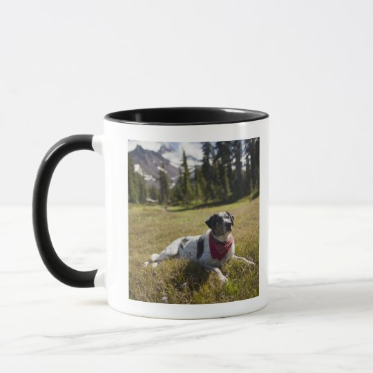 A dog rests after hiking to Jefferson Park in Mug