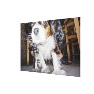 A dog sniffing close-up. canvas print