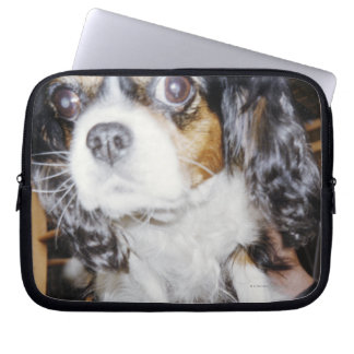 A dog sniffing close-up. computer sleeve