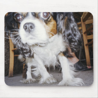 A dog sniffing close-up. mouse pad