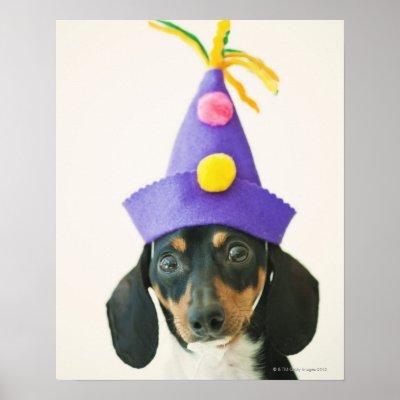 a_dog_wearing_a_funny_hat_print-rcdc469a9566a456a9bbf2c80ede21665_wvc_400.jpg