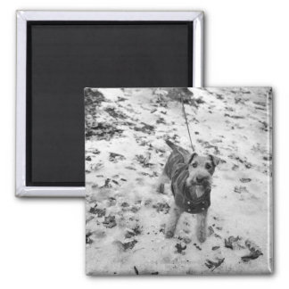 A dog wearing a jacket. 2 inch square magnet