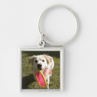 A dog with a frisbee keychain
