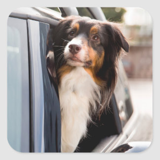 A Dog With Her Head Out of a Car Window Square Sticker