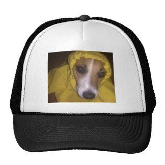 A Dog's Life Trucker Hat