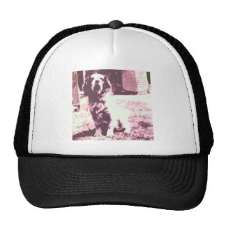 A Dogs Life Trucker Hat