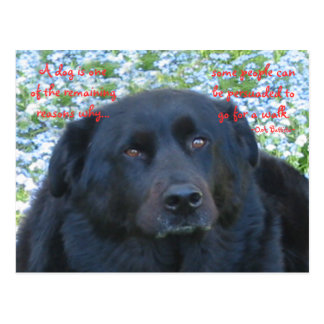 A Dog's Life...walk Postcard