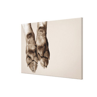 A dogs paws canvas print