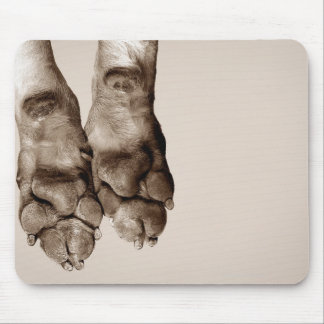 A dogs paws mouse pad