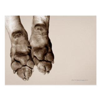 A dogs paws postcard